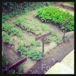 33.-Anantara-Hoi-Ans-herb-patch-150x150