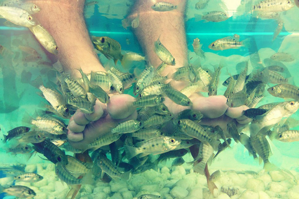 Faire une « fish pedicure »